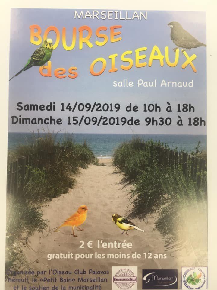 BOURSE DES OISEAUX «MARSEILLAN»